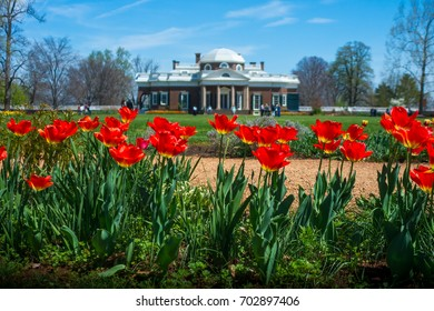 Red Tulips in Springtime, With Tourists & Thomas Jefferson's Monticello Estate in Distance
