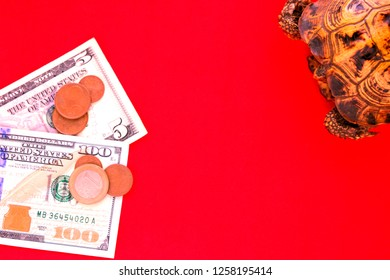 Red turtle on a bright background. Coins and bills of red tone. Concept of slow progress of financial flows. Hundred Dollar Bill. Earnings on drains from beginners.