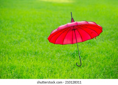 Red umbrella in green rice field and sunset.