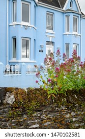 Red Valerian on rock wall at blue stucco house at Mevagissey village fishing port in Cornwall, England - June 11, 2019