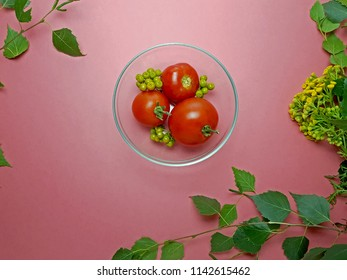 """Red veg. Tomato, """"Solanum lycopersicum"""" in plate. Red, Pink background. Grass, leaves of a tree birch """"Betula pendula"""". Rowan berries. Yellow field plant, flower """"Tanacetum""""."""