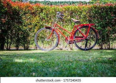 Red vintage bicycles parked on the grass and have natural backgrounds.