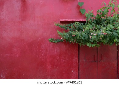 Red vintage building wall with closed door and green plant in Pushkar, India.