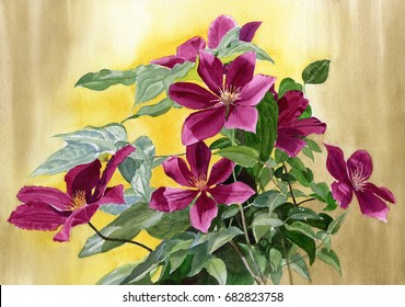 Red Violet Clematis with gold background. Watercolor illustration of violet flowers and leaves with a gold and brown background.