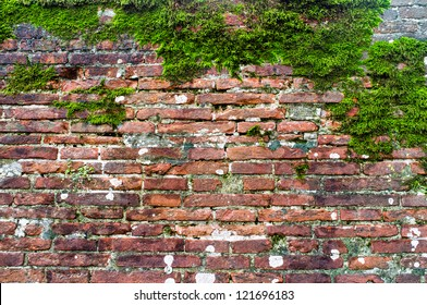 Red wall with musk