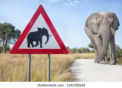 red warning triangel sign and a big elepahnt bull walking on on a gravel road, Nmibia, Africa