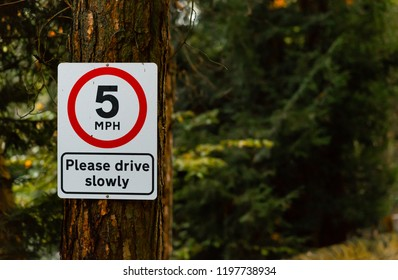 Red and White 5 MPH Please drive slowly sign hanging on a tree in a forest in the middle of the UK on an Autumns day