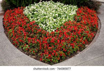 red and white begonia in cardioid parterre