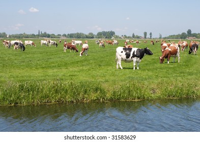 Red and white and black and white cows on sunny meadow
