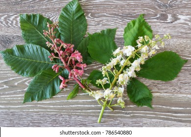 red and white chestnut blooms for bach flower remedies