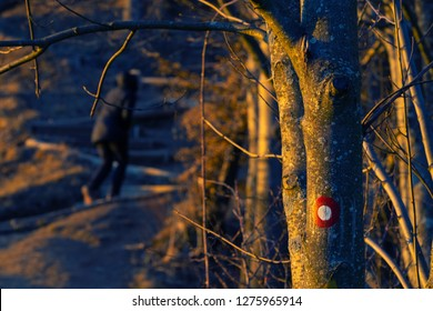 Red and white circular trail marking on beech tree trunk with female hiker visible in background during golden hour. Hiking, orientation and nature concepts.