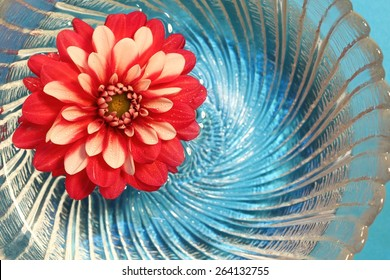 Red and white flower floating in water with blue background. Perfect for anything patriotic or for independence day/july 4th.