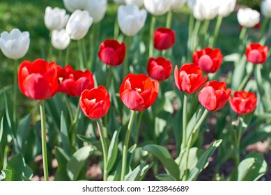 red and white flowers in a flowerbed in a city park