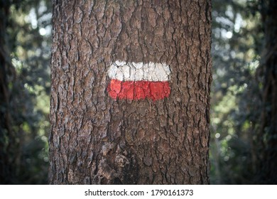 Red and white footpath sign. painted tree (it is an indication for a mountain path in Italy)