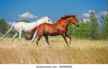red and white horse running across the field