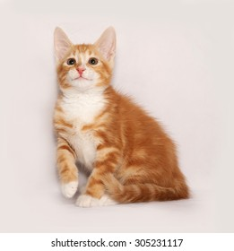 Red and white kitten sitting on gray background