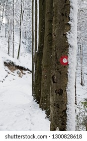 Red and white marking on tree trunk next to the trail in snow covered forest. Hiking, orientation, season, forestry and nature concepts.