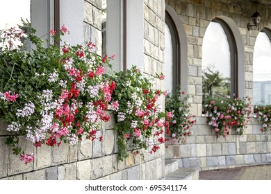 Red, white and pink flowers in pots