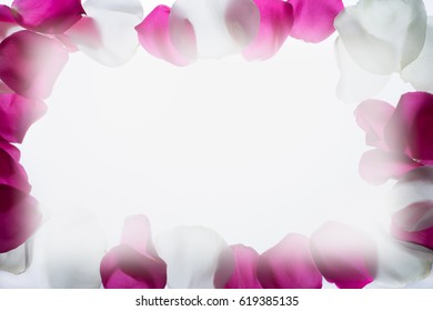 red and white rose petals background
