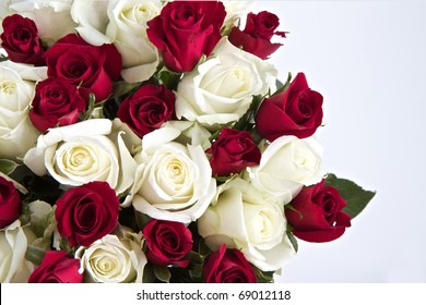 Red and White roses isolated on a white background with space for text