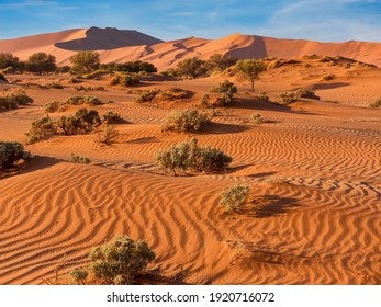 The red, windswept sand of Sossusvlei in the Namib Desert, Namibia, where vegetation has adapted to survive the harsh conditions. The large sand dune known as Big Daddy, is in the background. - Shutterstock ID 1920716072