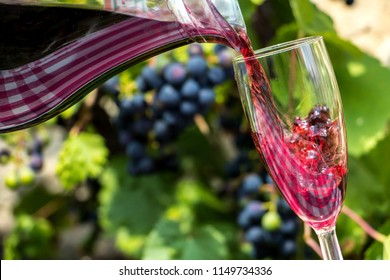 Red wine flows from the jar into the glass, on a background of blue grapes on a vineyard. Pour the wine into the wine glass.