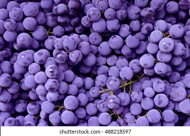 Red wine grape. Dark grapes background. Isabella grape. Blue grapes. Grape vine.
