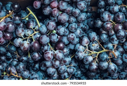 Red wine grapes background, berries of dark bunch of grape