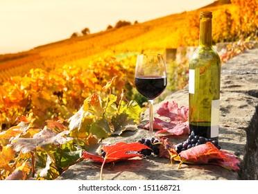 Rotwein und Weintrauben. Terrassenweine in der Region Lavaux, Schweiz