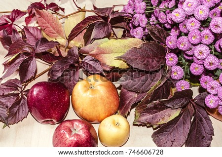 Red and yellow apples with bouquet of autumn wild grapes and small purple asters lying on light plywood