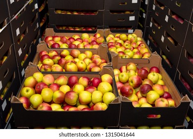 red and yellow apples in boxes in the wholesale market