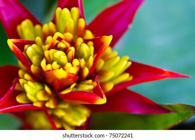 Red and yellow Beautiful Orchid