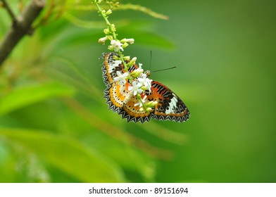 red yellow butterfly on flower of Thailand background