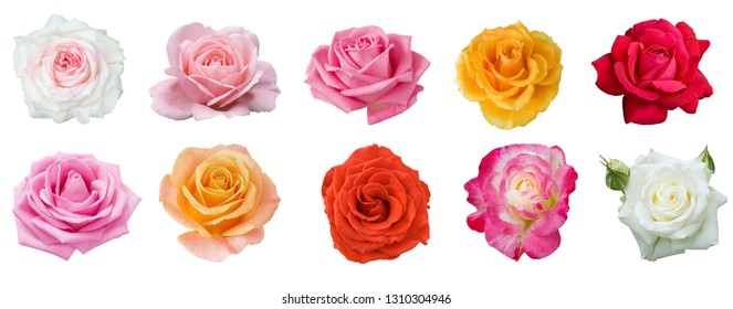 red, yellow, cream, white, pink rose set isolated on white background