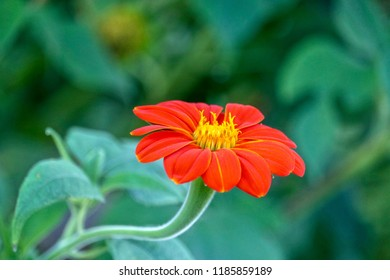 Red and Yellow Flower, leaves, closeup, background, texture