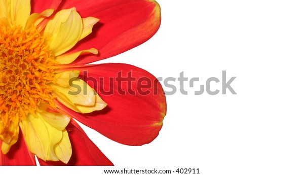 red yellow flower part isolated on white background