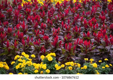 Red and yellow flowers in garden