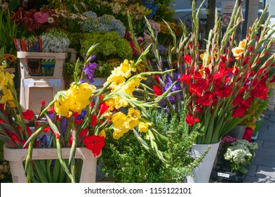 Red and yellow gladioluses at flower shop