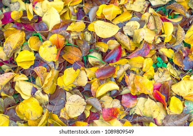 Red, yellow, gold and orange, elm, maple and oak leaves carpet the ground in a kaleidoscope of color in the fall, in Texas