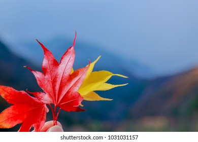 Red and yellow leaves of maple in hand close-up against the background of autumn mountains.