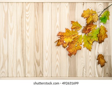 Red yellow leaves on rustic wooden texture. Autumn background