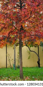 red and yellow leaves on a tree during autumn season.