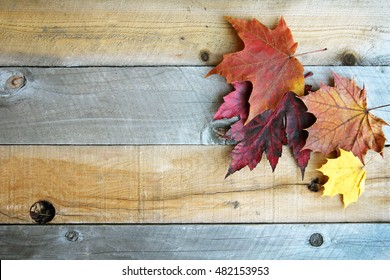 Red, Yellow, and Orange Fall Sugar Maple Tree Leaves are Framing the Corner of A Weathered Rustic Wood Plank Background.