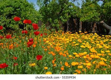 Red, Yellow & Orange Flower Garden