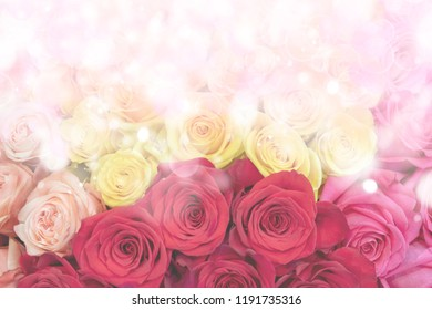 Red, yellow and pink roses.