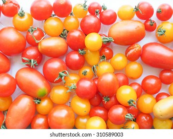 Red and yellow tomatoes (Solanum lycopersicum) vegetables, vegetarian food