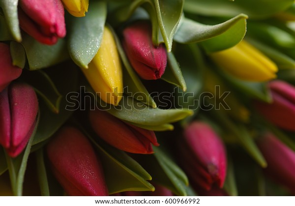 Red and yellow tulips background