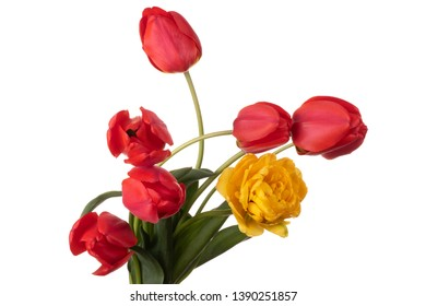 Red and yellow tulips bouquet isolated on a white background