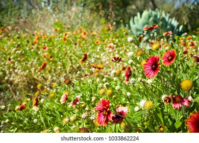 Red and Yellow Wildflowers in a Natural Field