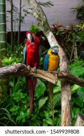 Redand Yellow Macaw Parrots sitting on a branch in a tropical park